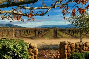 "A Trip to Temecula, the ""New Napa"""